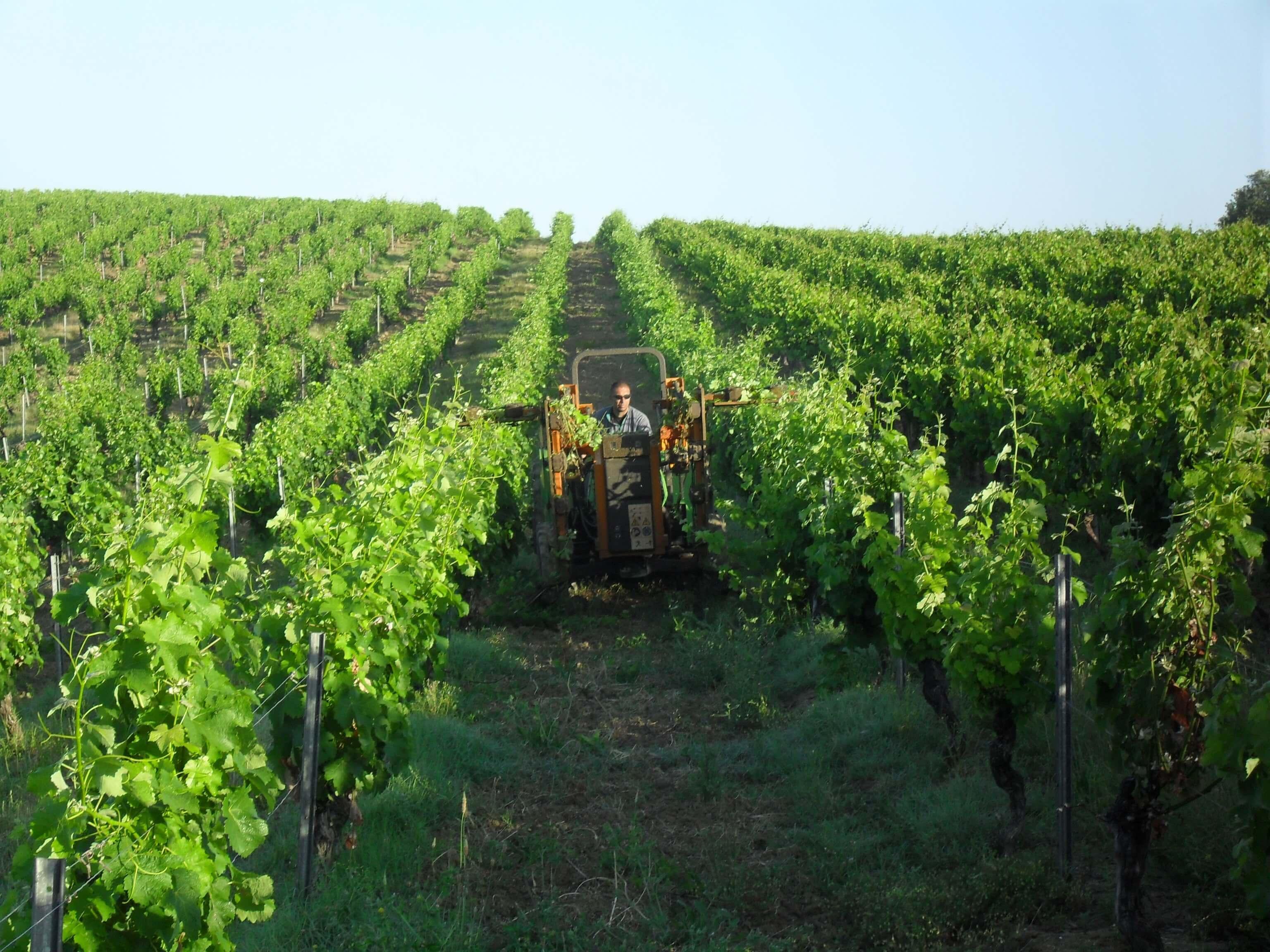 Arbeiten auf dem Weingut Domaine de Bosc Long