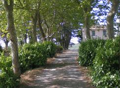 Zufahrt zum Weingut Domaine de Bosc Long